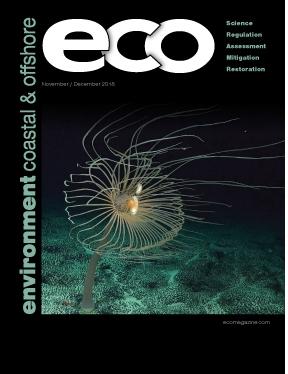 ECO Print/Digital